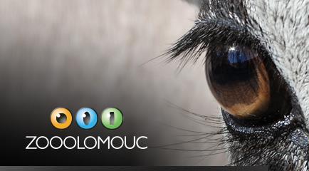 UZAVŘENÍ ZOO OLOMOUC??????? Vážení návštěvníci, olomoucká zoologická zahrada je prozatímně až do odvolání uzavřena. Důvodem je vydání mimořádného opatření Ministerstva zdravotnictví a následného rozhodnutí Bezpečnostní rady statutárního města Olomouce.  O opětovném, otevření vás budeme včas informovat, děkujeme za pochopení, Vaše Zoo Olomouc.