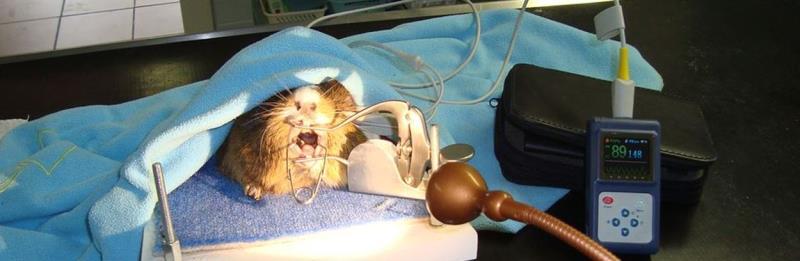 Veterinární ordinace pro psy, kočky a drobné savce. Všeobecná preventivní a léčebná činnost.
