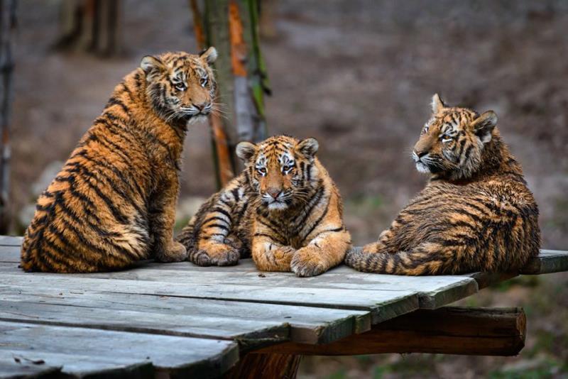 S vysvědčením zadarmo do zoo 30.1.-2.2.     I v zimním období si zvířata užívají venkovní výběhy,  přijďte se podívat jak moc